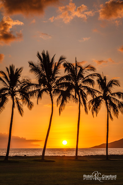 Golden sunset in Kihei, Maui with palms in silhouette.